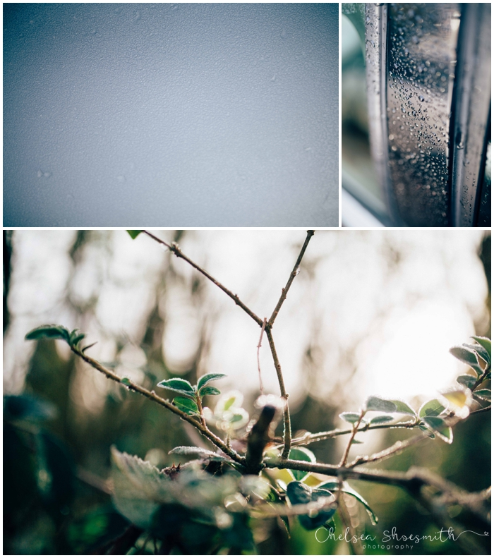 (1 of 18) Frozen garden, Just Because, Chelsea Shoesmith Photography_
