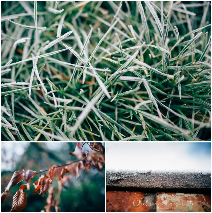 (12 of 18) Frozen garden, Just Because, Chelsea Shoesmith Photography_