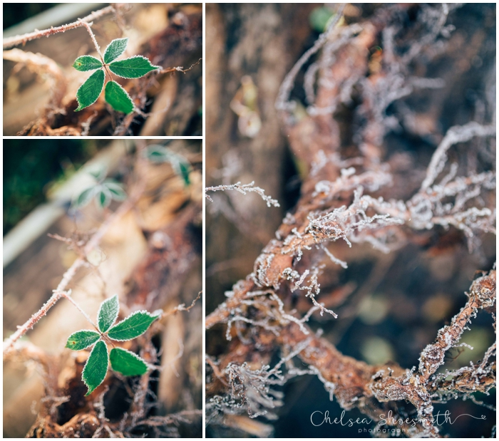 (5 of 18) Frozen garden, Just Because, Chelsea Shoesmith Photography_