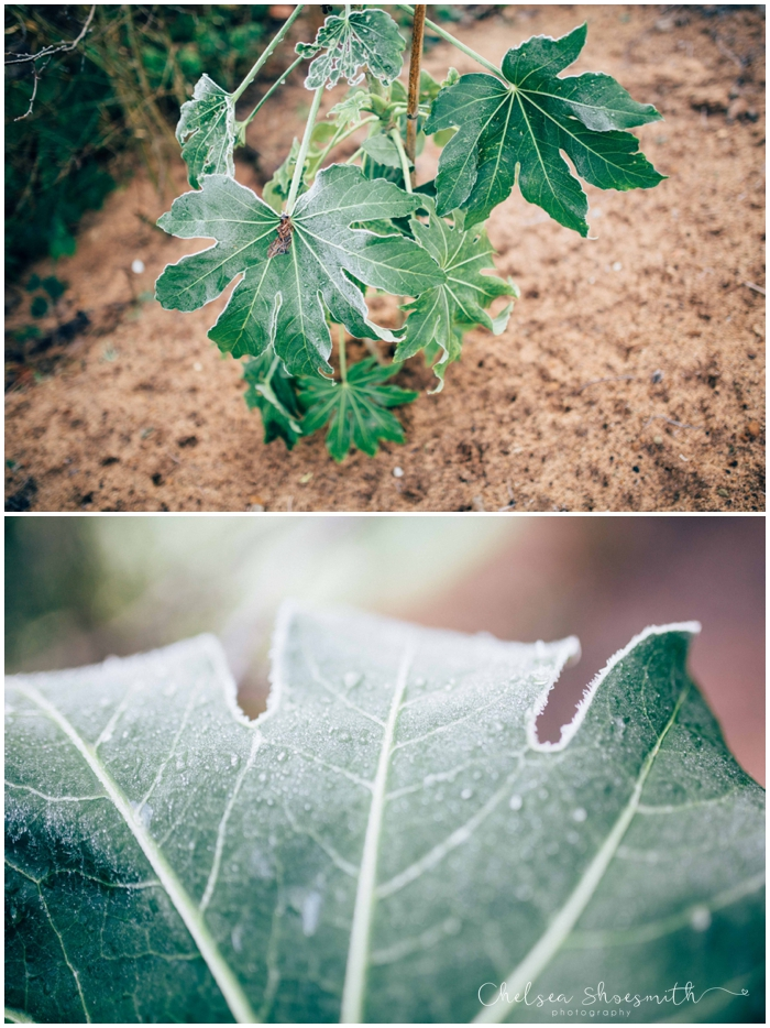 (9 of 18) Frozen garden, Just Because, Chelsea Shoesmith Photography_