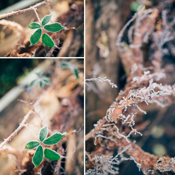 Frozen garden, Just because...