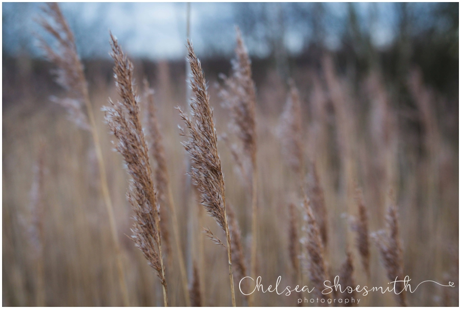 (1 of 18) Humberhead peatlands nature photography chelsea shoesmith photography yorkshire photographer_