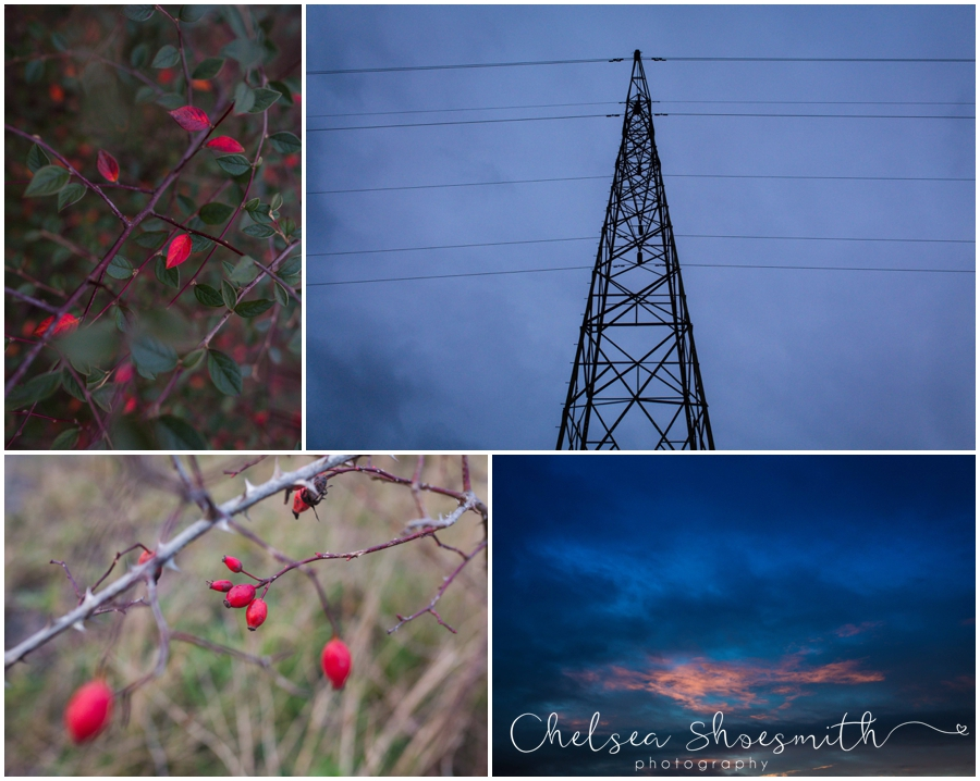 (17 of 18) Humberhead peatlands nature photography chelsea shoesmith photography yorkshire photographer_
