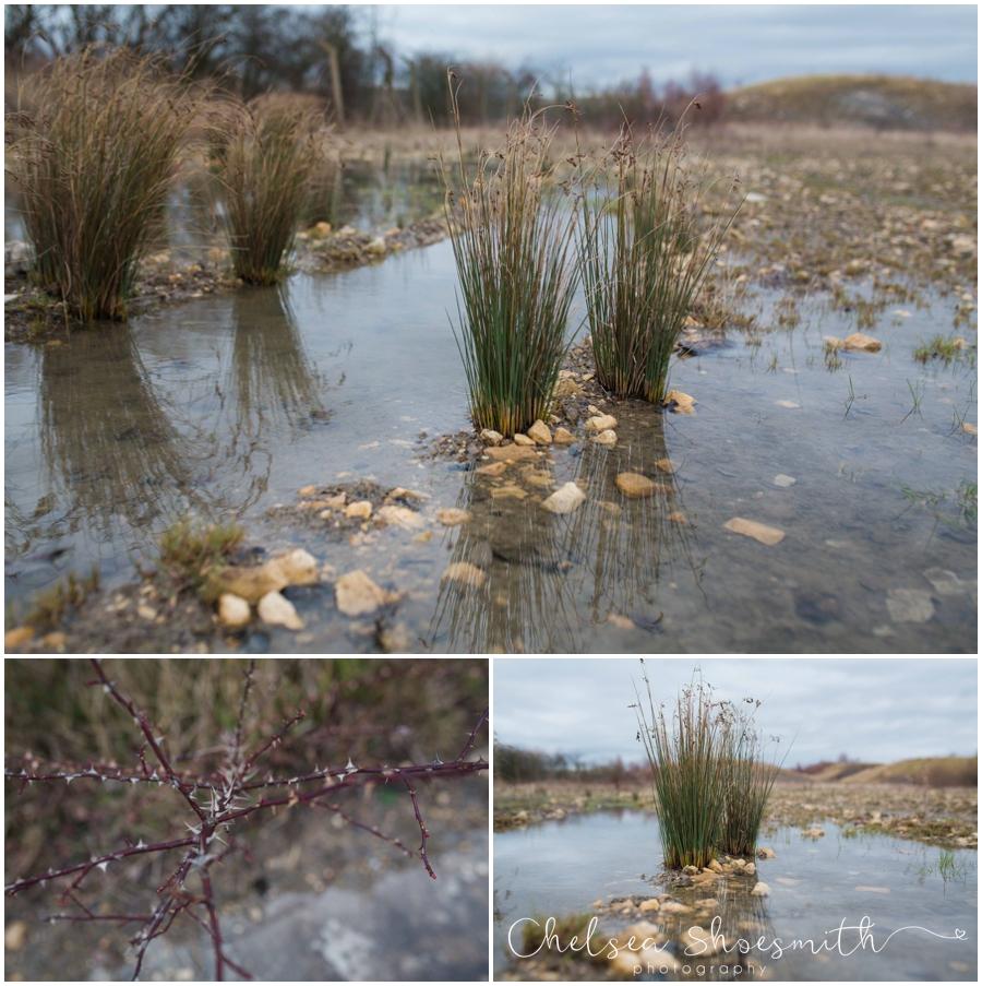 (3 of 18) Humberhead peatlands nature photography chelsea shoesmith photography yorkshire photographer_