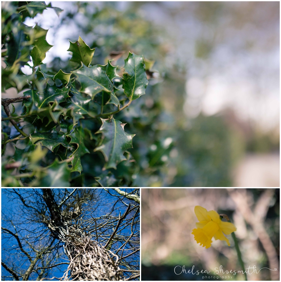 (14 of 19) Spring, Just Because... cheshire photographer chelsea shoesmith photography_