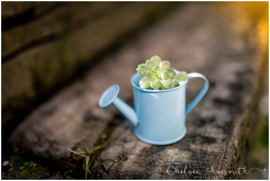 (5 of 19) Spring, Just Because... cheshire photographer chelsea shoesmith photography_